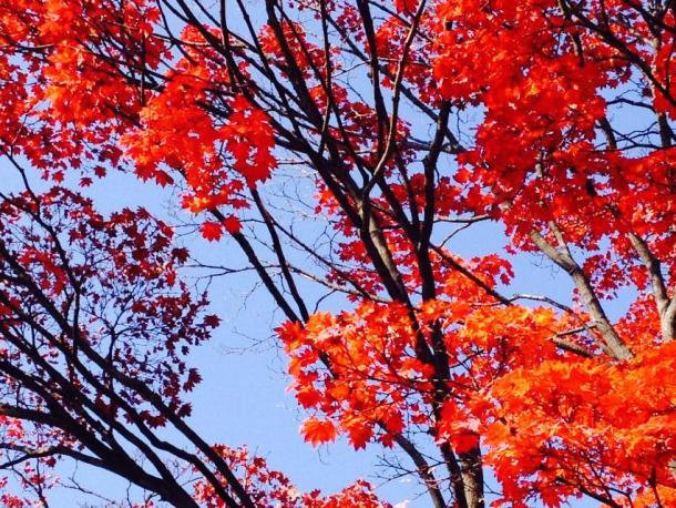 Morioka park
