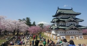 Hanami 101: A Detailed and Very Useful Guide for Looking at Cherry Blossoms